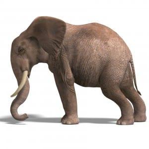 graphic - elephant stance