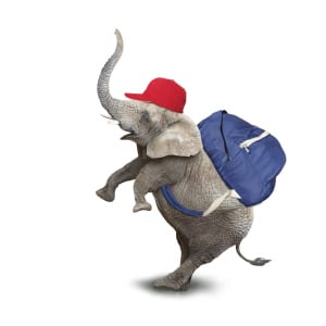 graphic - elephant with backpack and cap